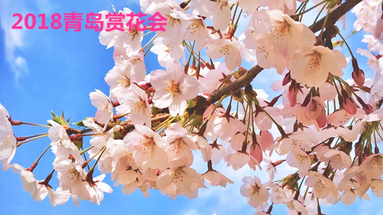 http://live.qingdaonews.com/live/public/attachs/live/201804/16/c12ac97eda4b1294c8a96b895e3c4bf18b0da8171523863279.jpg